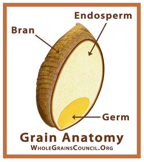 Parts of a Grain