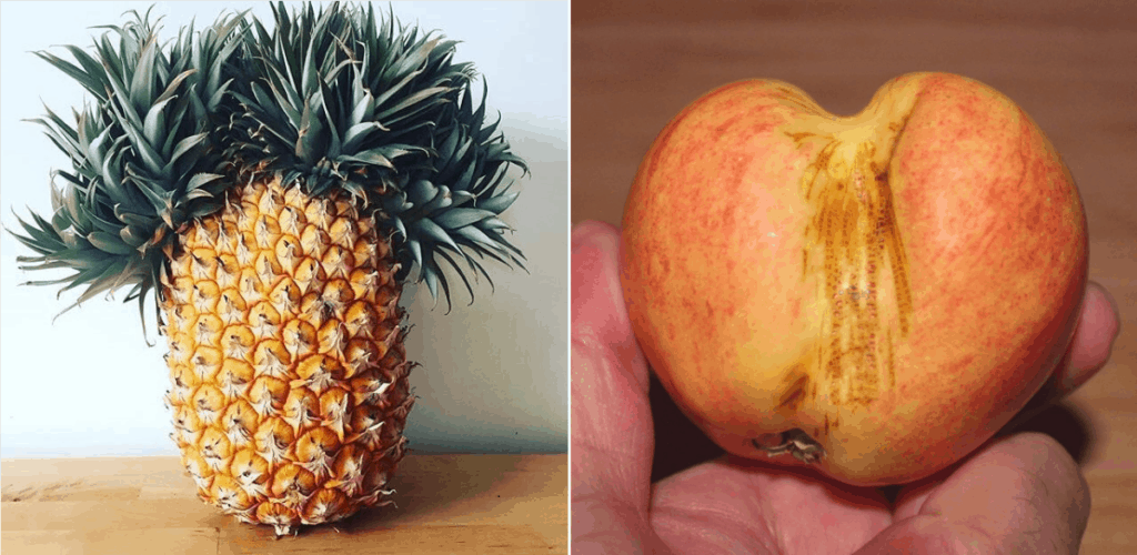 how to choose ripe fruit, choosing ripe fruit, how to tell if a pineapple is ripe, how to tell if an apple is ripe