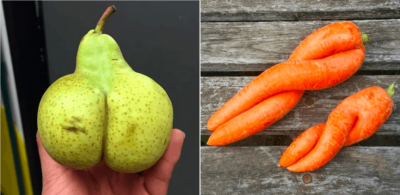 choosing ripe fruit, ugly fruits and vegetables, how to tell if a pear is ripe