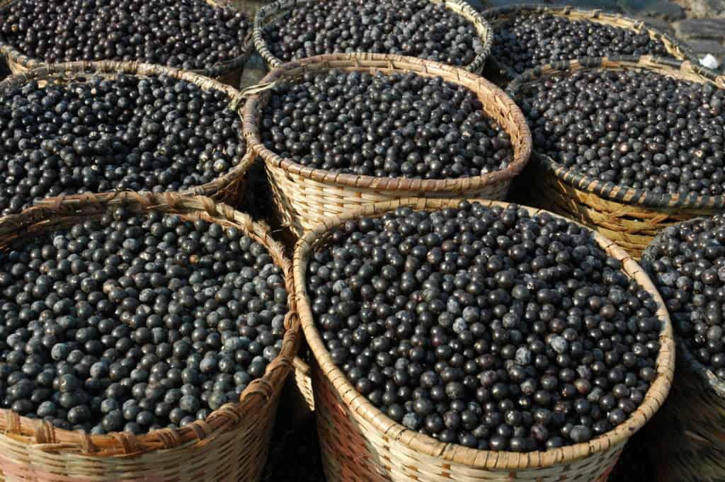 Acai Fruit Harvest