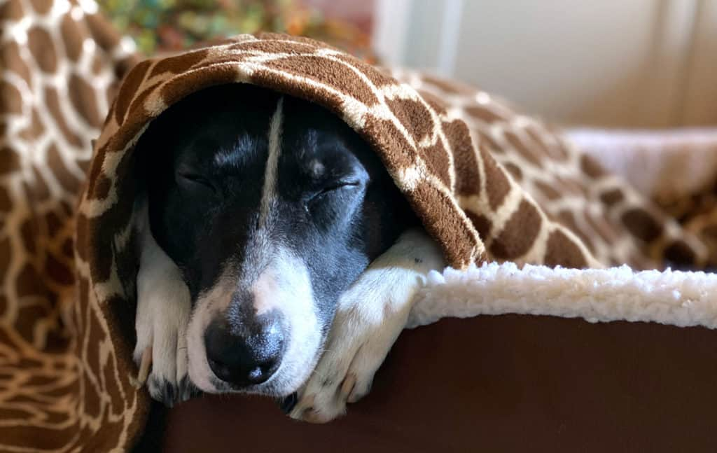 my dog sleeping