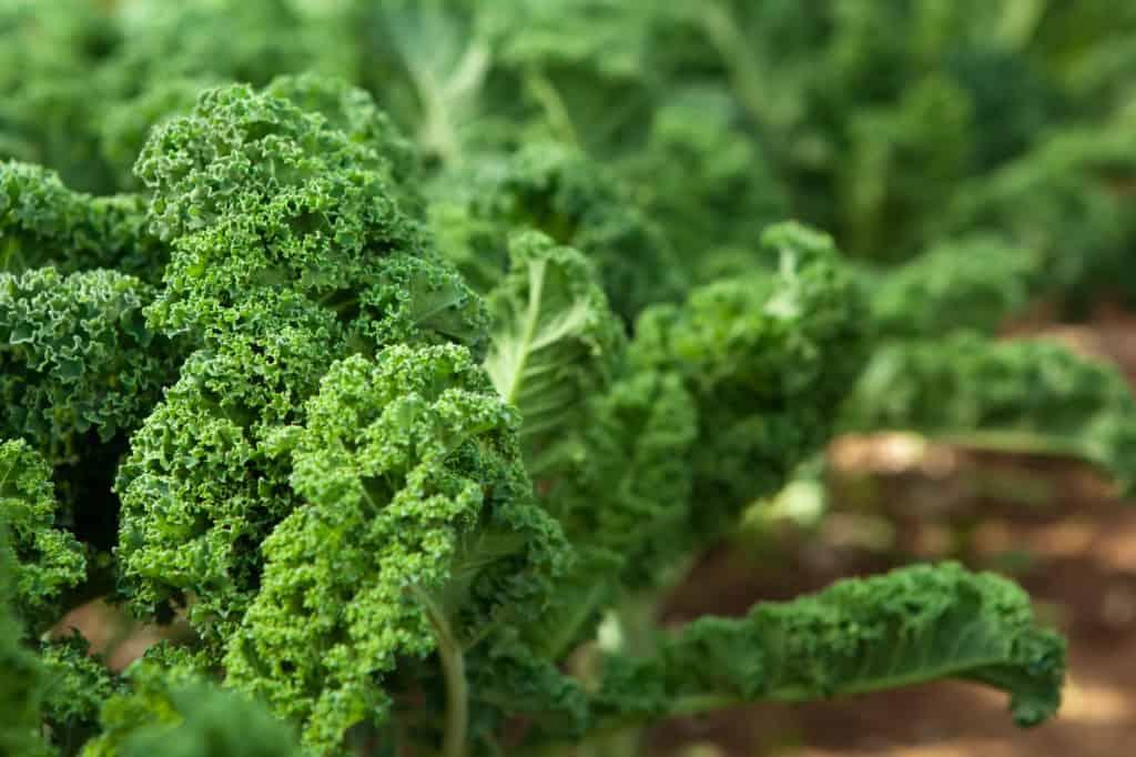 Leafy Greens for Bone Health
