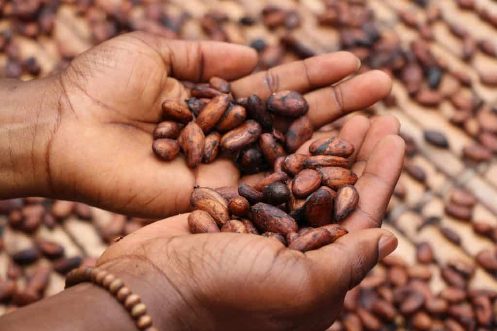 Raw Cacao Benefits